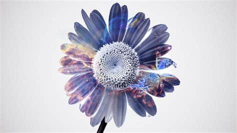 wallpaper flower  nature