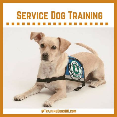 who trains service dogs canine skill mastery service service