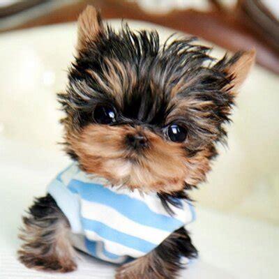 woof woof puppies woof woof puppies woofwoofpuppies