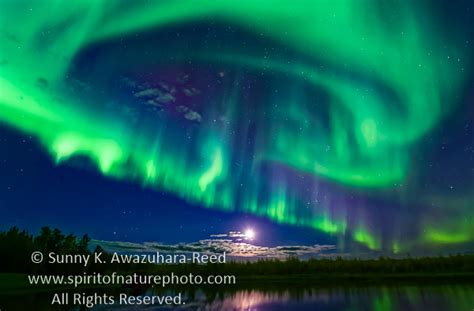 northern lights in june northern lights fairbanks june shelly lighting