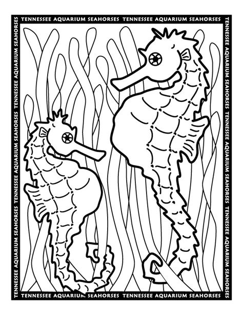 hard seahorse coloring pages coloring pages of seahorses az coloring pages