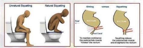 Floating Or Sinking Stools by What Is The Proper Way To Realfarmacy Healthy