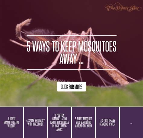 how to keep mosquitoes away from house 5 ways to keep mosquitoes away gardening