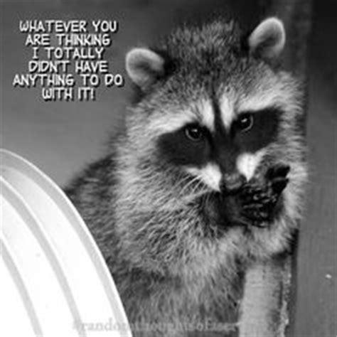 Raccoon Excellent Meme - cute funny raccoon memes google search pinterest