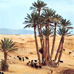 Desert Flowering Plants - date palm plant britannica com