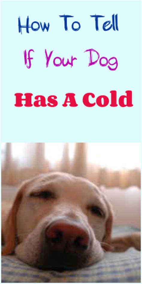 puppy has a cold how to tell if your has a cold petslady