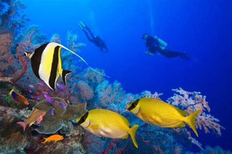 imagenes para fondo de pantalla con movimiento 3d descargar fondos de pantalla 3d con movimiento sharks