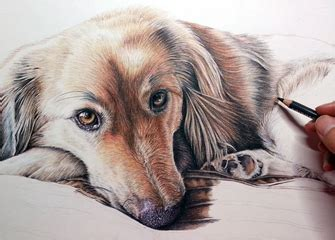 mckinney art house colored pencil pet portraits www pixshark com images galleries with a bite