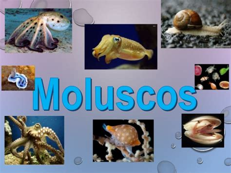imagenes de animales moluscos moluscos 1