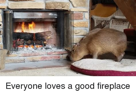 Fireplace Meme - 25 best memes about funny hump day and love funny