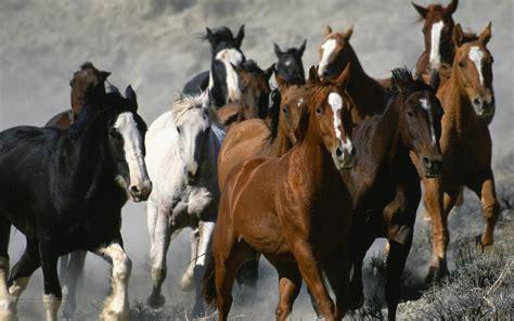 wallpaper for desktop running horse animals zoo park 9 white running horse wallpapers white