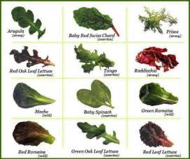 lettuce types sles pinterest