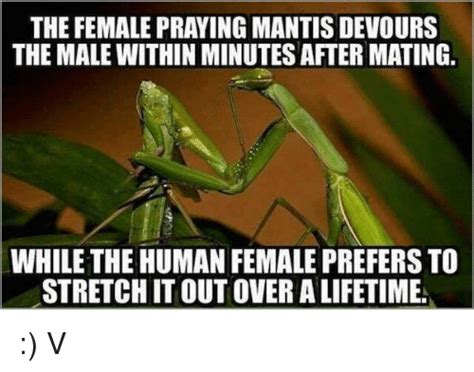 Mantis Meme - mantis meme 28 images sometimes a praying mantis has