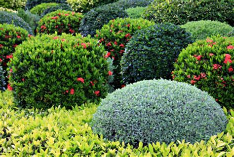 pictures  shrubs  landscaping  design plans