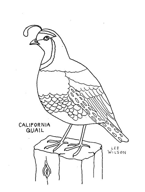 anatomy of animals coloring book quail coloring page animals town animals color sheet