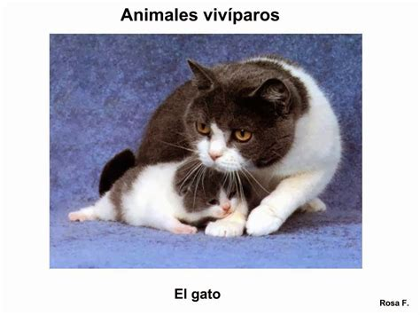 imagenes animales viviparos vocabulario en im 225 genes maestra de infantil y primaria