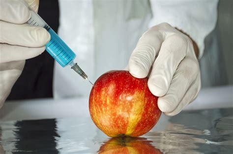 alimentos transgenicos alimentos transg 233 nicos ventajas y desventajas