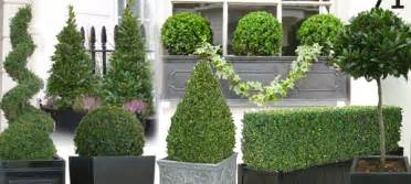 How To Topiary A Bay Tree - topiary trees and topiary ball plants