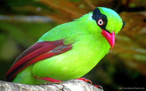 green colored green colored bird wallpapers driverlayer search engine