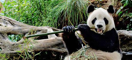 entrada zoológico barranquilla zool 243 gico infantil de chapultepec en ciudad de m 233 xico