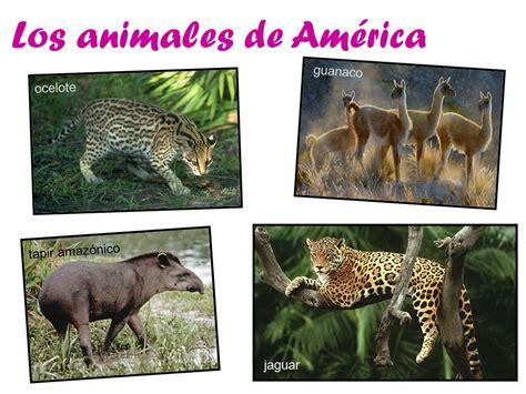 los invencibles de amrica los animales de am 233 rica ppt descargar