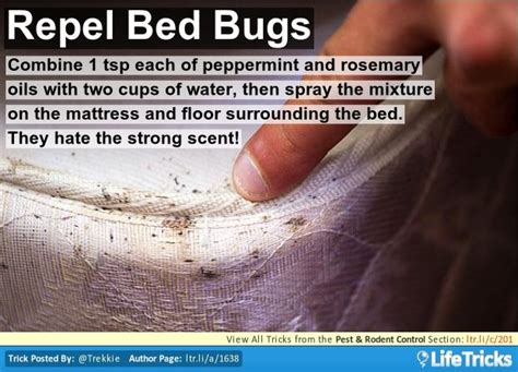 does peppermint oil repel bed bugs pest rodent control repel bed bugs help wanted