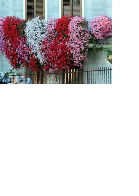 concorso balcone fiorito concorso balcone fiorito 2015 prima edizione