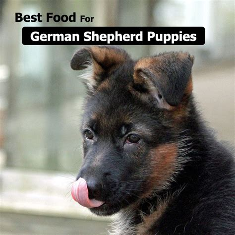 best food for german shepherds types of food for german shepherd archives praise