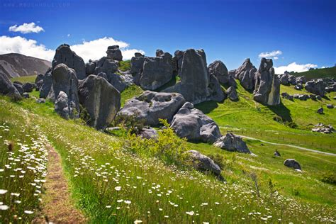 Email Address Search Nz Flower Path Castle Hill New Zealand Beautiful Photography