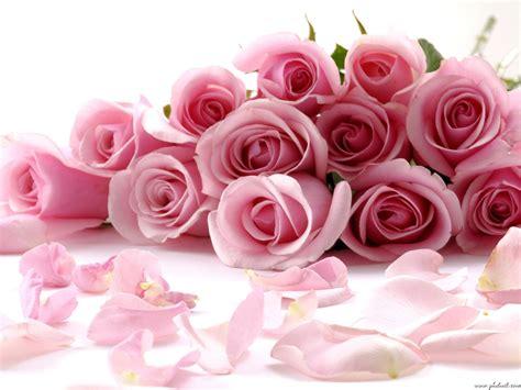Beautiful hd flowers desktop wallpapers hd wallpapers free download