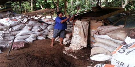 Pupuk Kotoran Sapi Tanpa Olahan basuki sukses bisnis limbah kotoran sapibisnis usaha ternak