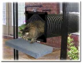 Backyard Dog Pens by Outdoor Cat Tunnel Ideas Images Amp Pictures Becuo