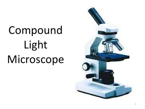 compound light microscope uses compound microscope basic