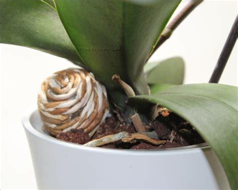 Wie Pflegt Eine Orchidee 4794 by So Pflege Ich Meine Phalaenopsis Orchideen