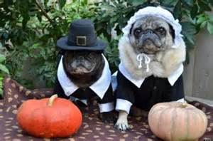 dogs thanksgiving 25 pets in pilgrim costumes photos