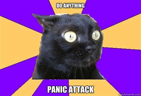 Anxiety Cat Meme - do anything panic attack anxiety cat quickmeme