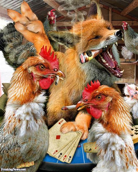 fox in the hen house fox in the hen house pictures freaking news