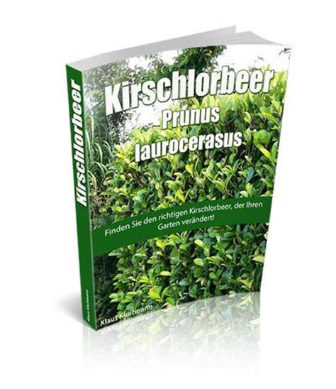 wann pflanzt kirschlorbeer kirschlorbeer e book kirschlorbeer pflanzen