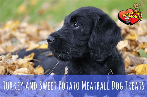 dogs and sweet potatoes turkey and sweet potato meatball treats aussie pet mobile greater west
