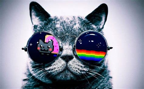 wallpaper cat 3d glasses nyan cat cat glasses wallpapers hd desktop and mobile