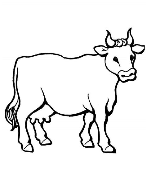 simple cow coloring page cute cow drawings cliparts co