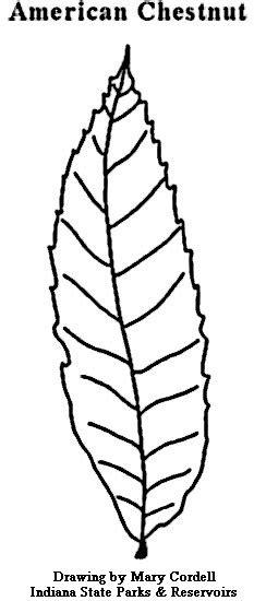 dnr coloring pages plants