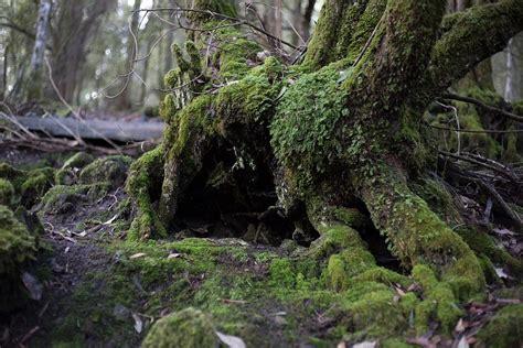 wallpaper alam peri foto gratis pohon hutan lumut lanskap alam gambar