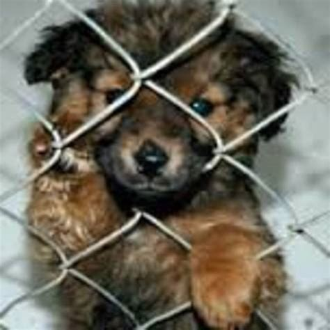 when to sell puppies petition pet shops sell dogs when shelters are overflowing