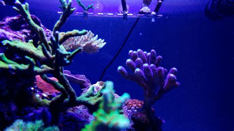 power compact reef lighting coral color growth atlantik compact orphek