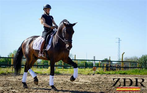 doma de caballos a la doma y entrenamiento de caballos en venta en andaluc 237 a