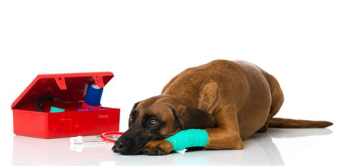 dogs aid seven essentials for your