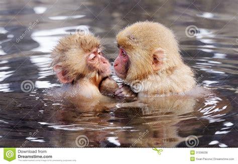 japanische möbel japanische makaken lizenzfreie stockfotos bild 31336038