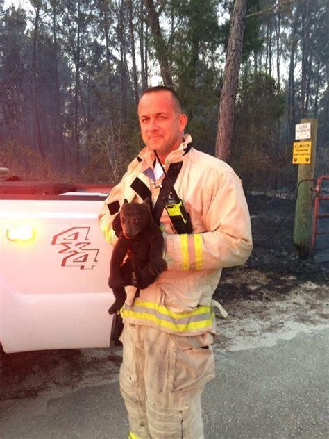 rescue junior florida firefighters rescue smokey junior from brush