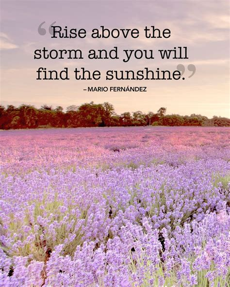 quotes about summer 535 best images about our favorite quotes on